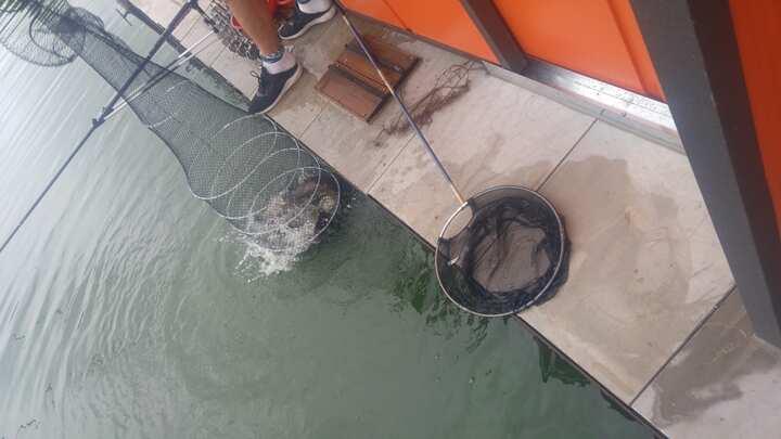 fish_pay_12013934.jpg