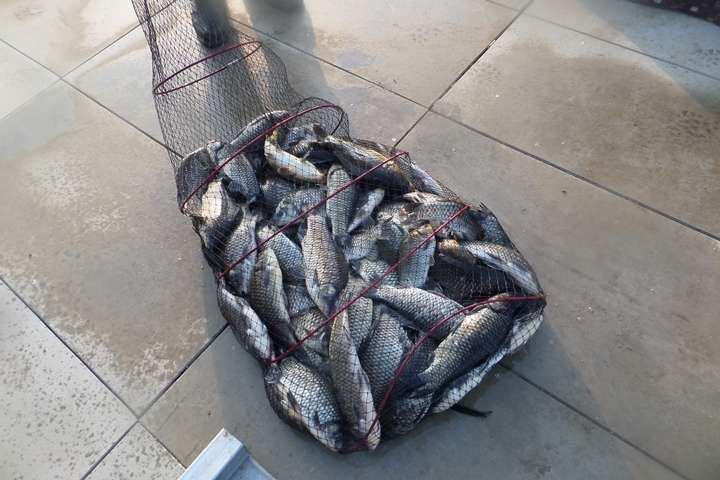 fish_pay_12242277.jpg