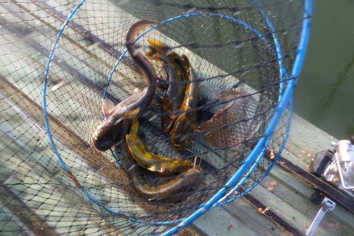 fish_pay_12245183.jpg