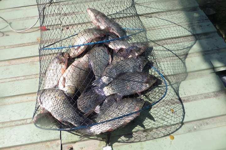fish_pay_12252869.jpg