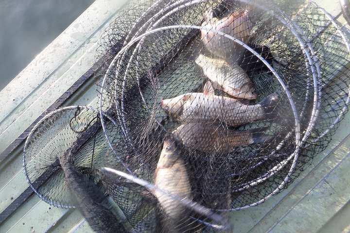 fish_pay_12261490.jpg