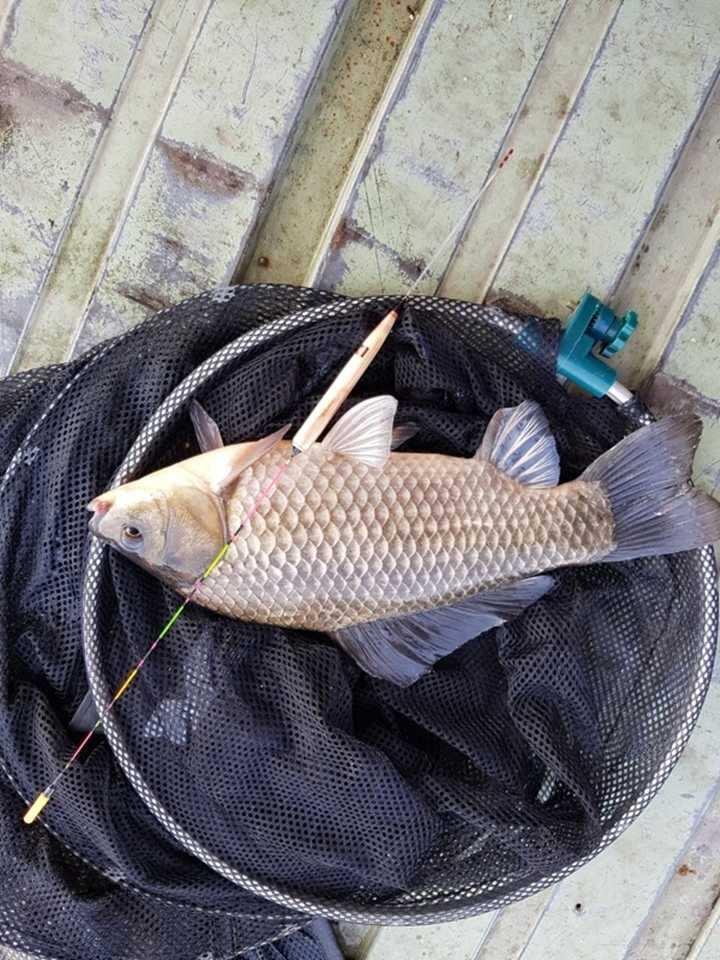 fish_pay_12303999.jpg