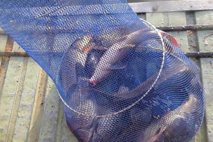 fish_pay_12322795.jpg
