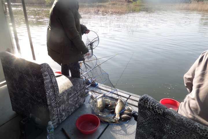 fish_pay_1232388.jpg