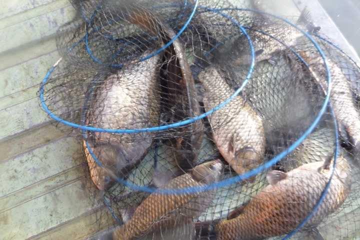 fish_pay_1233184.jpg