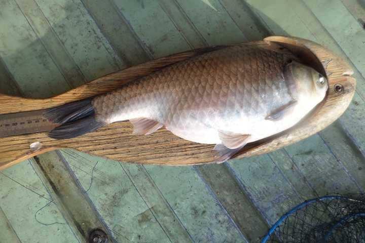 fish_pay_12332827.jpg