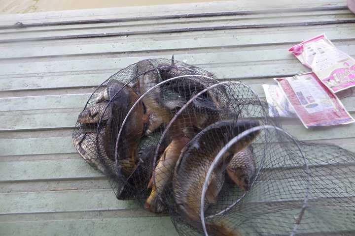 fish_pay_12352649.jpg