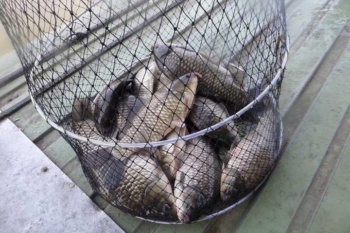 fish_pay_12354066.jpg