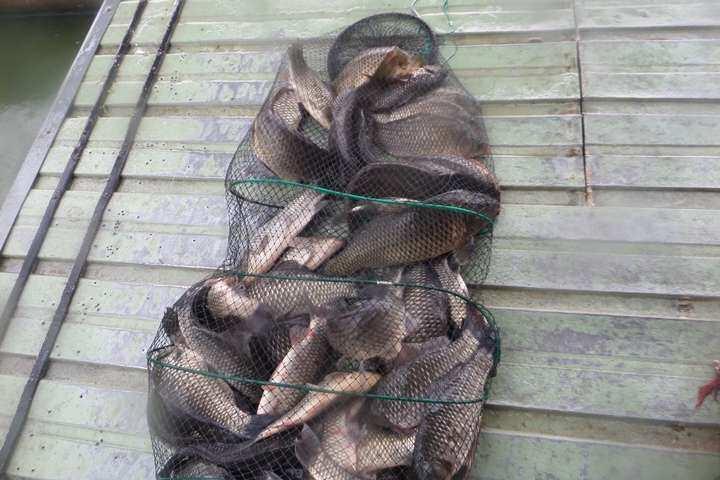 fish_pay_1258051.jpg